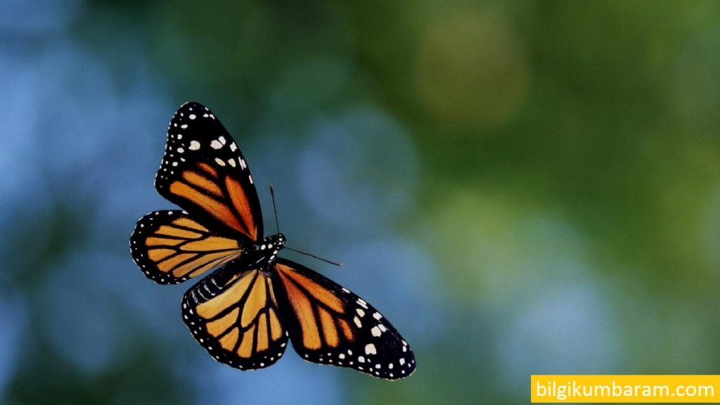 korona virüs kelebek etkisi