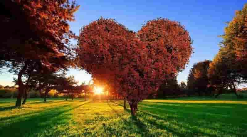 Ornanik Aşk