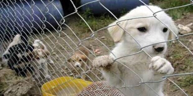 Barınaktan Köpek Sahiplen